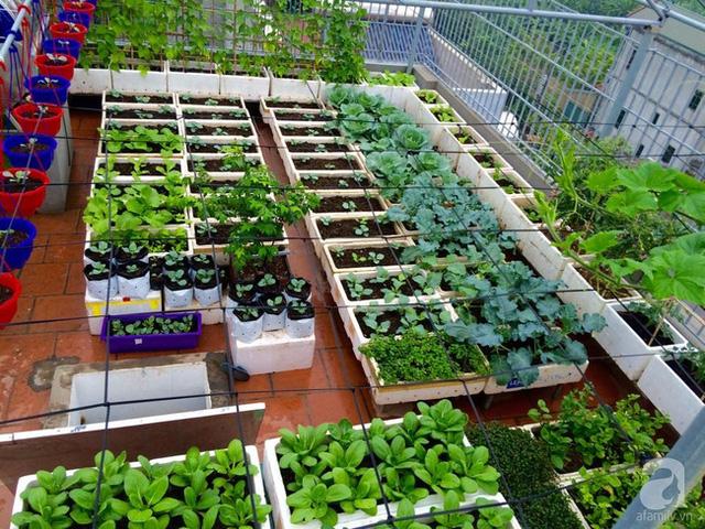 Tổng hợp vườn rau sạch để thực hiện cho nhà phố - Quang Anh HCM